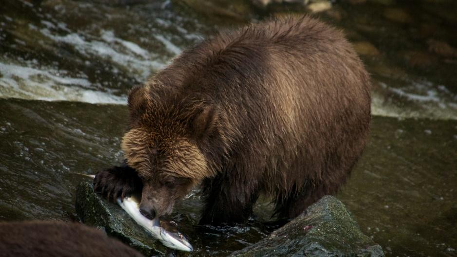 8 salmon169