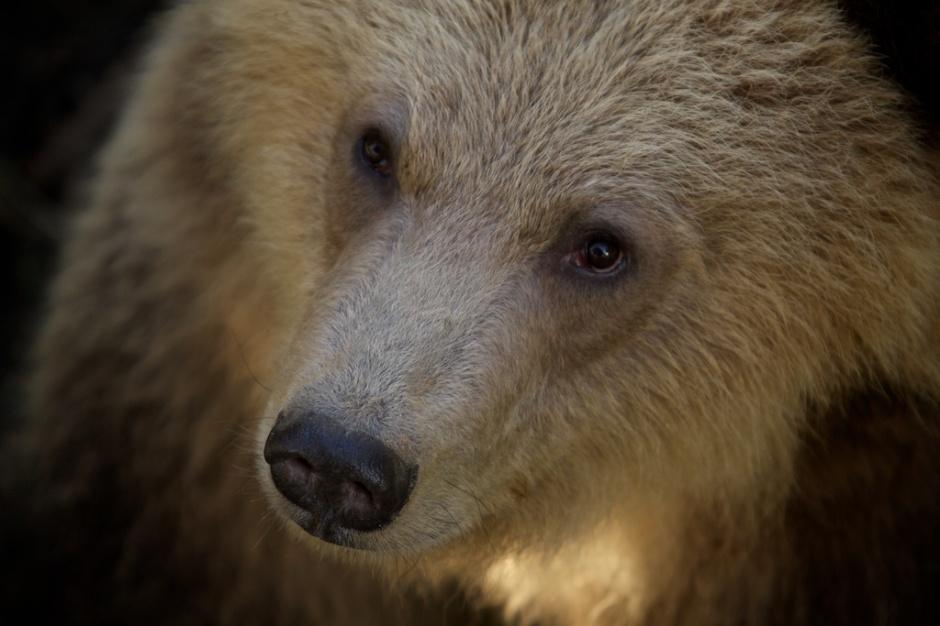 oh that bear